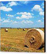 Hayfield Canvas Print by Venus