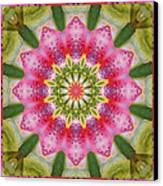 Healing Mandala 25 Canvas Print by Bell And Todd