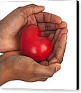 Heart In Hands Canvas Print