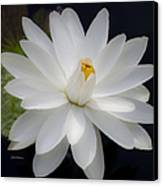 Heavenly Aquatic Bloom Canvas Print by Julie Palencia
