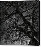 Heavy Rain Canvas Print by Svetlana Sewell