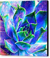 Hens And Chicks Series - Touches Of Blue  Canvas Print