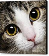 Here Kitty Kitty Close Up Canvas Print by Andee Design