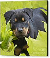 Hey Here I Am Canvas Print by Heiko Koehrer-Wagner
