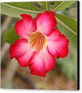 Hibiscus Flower Canvas Print by Maeve O Connell