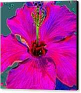 Hibiscus Skies Canvas Print by Rebecca Flaig
