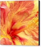 Hibiscus Canvas Print by Tony Cordoza