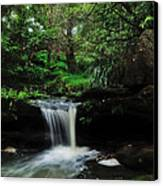 Hidden Rainforest Canvas Print by Kaye Menner