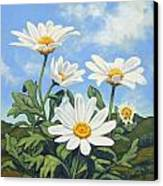 Hills And White Daisies Canvas Print by James Derieg