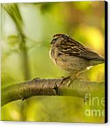 His Eye Is On The Sparrow Canvas Print by Lois Bryan