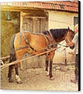Hitched The Horses Canvas Print by Odon Czintos