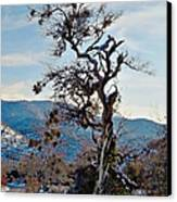 Hitchhiker On Highway 173 Canvas Print