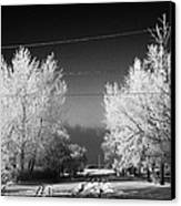 hoar frost covered trees on street in small rural village of Forget Saskatchewan Canada Canvas Print