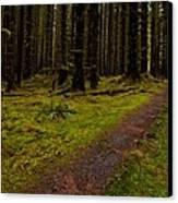 Hoh Rainforest Road Canvas Print by Mike Reid