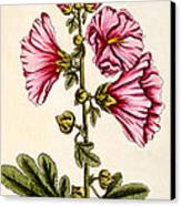 Hollyhocks Canvas Print by Elizabeth Blackwell