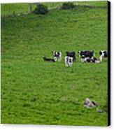 Holsteins Canvas Print by Bill Wakeley
