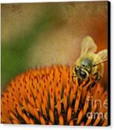 Honey Bee On Flower Canvas Print by Dan Friend
