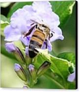 Honey Bee On Lavender Flower Canvas Print
