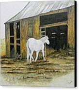 Horse And Barn Canvas Print by Bertie Edwards