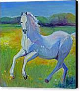 Horse Fancy Canvas Print by Gwen Carroll