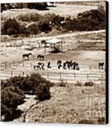 Horse Farm At Kourion Canvas Print by John Rizzuto