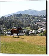Horse Hill Mill Valley California 5d22662 Canvas Print by Wingsdomain Art and Photography