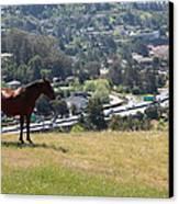 Horse Hill Mill Valley California 5d22663 Canvas Print
