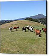 Horse Hill Mill Valley California 5d22673 Canvas Print by Wingsdomain Art and Photography