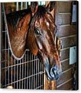 Horse In A Box Stall II - Horse Stable Canvas Print by Lee Dos Santos