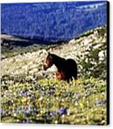 Horse In Mountain Wildflowers Canvas Print by Rebecca Adams