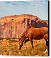 Horse In The Desert Canvas Print