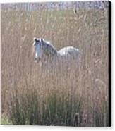 Horse In The Grass Canvas Print