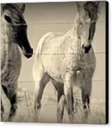 Horse Mysteries.. Canvas Print