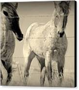 Horse Mysteries.. Canvas Print by Al  Swasey