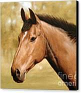 Horse Portrait II Canvas Print by John Silver