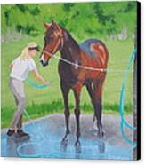 Horse   Wash Canvas Print