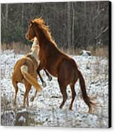 Horses At Play - 10dec5690b Canvas Print by Paul Lyndon Phillips