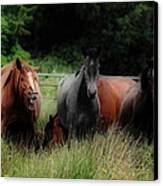 Horsing Around Canvas Print by Peter Skelton