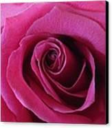 Hot Pink II Canvas Print