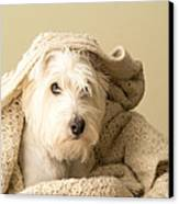 How About A Snuggle Card Canvas Print