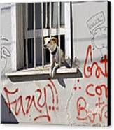 How Much Is That Doggie In The Window? Canvas Print by Kurt Van Wagner