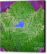 How Things Were Purple Green Blue Canvas Print by Holley Jacobs