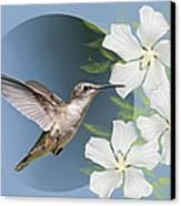 Hummingbird Heaven Canvas Print by Bonnie Barry