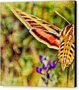 Hummingbird Moth In Wildflowers Canvas Print by Pam Vick