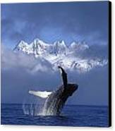 Humpback Whale Breaches In Clearing Fog Canvas Print