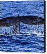 Humpback Whale Tail Fluke During Deep Dive Canvas Print by Puget  Exposure