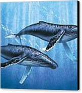 Humpback Whales Canvas Print