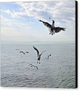 Hungry Seagulls Flying In The Air Canvas Print