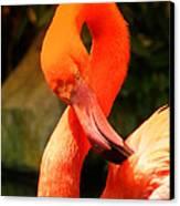 I Can Count To 8 - Flamingo Canvas Print by DerekTXFactor Creative