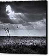 I Fly Away Canvas Print